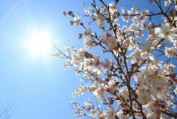 vreme florii