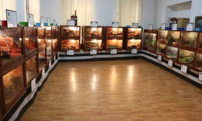 expozitie reptile muzeul judetean Giurgiu